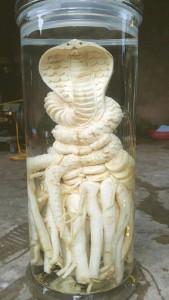 dieu khac rắn